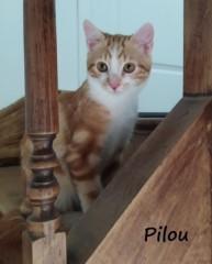 Pilou2